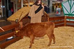AstroGeert_Kerstmarkt_Winkelhart_Blerick_2018-12-09 14.02.36_098