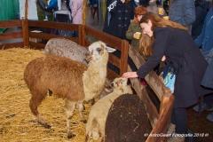 AstroGeert_Kerstmarkt_Winkelhart_Blerick_2018-12-09 14.02.50_099