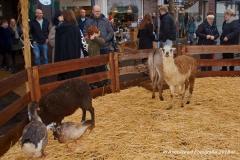 AstroGeert_Kerstmarkt_Winkelhart_Blerick_2018-12-09 14.04.25_107